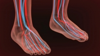 A Numbing Sensation in the Feet May Indicate Poor Circulation